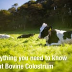 Everything you need to know about Bovine Colostrum