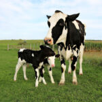 Why Do Experts Recommend Bovine Colostrum?