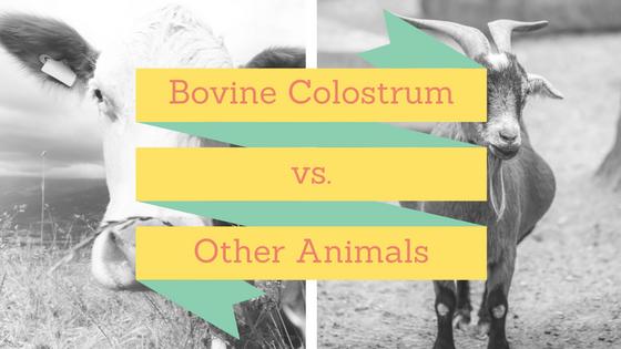 animal-colostrum