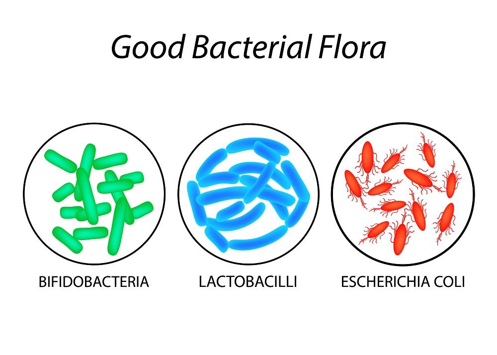 probiotics in colostrum