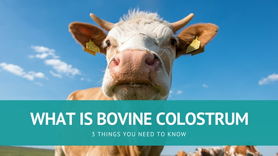 What Is Bovine Colostrum? 4 Things You Need to Know